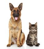 Kat en hond samen Stock Foto