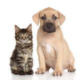 Kat en hond samen Royalty-vrije Stock Afbeeldingen