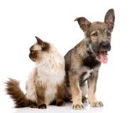 Kat en hond samen geconcentreerd op de kat Geïsoleerd op wit stock afbeelding