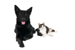 Kat en hond samen, op wit wordt geïsoleerd dat Royalty-vrije Stock Fotografie