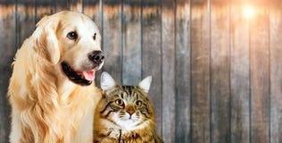 Kat en hond, Siberisch katje, golden retriever samen op houten achtergrond royalty-vrije stock afbeeldingen