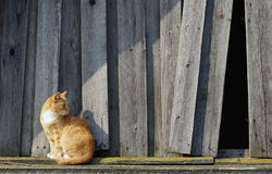 Kat en houten omheining royalty-vrije stock fotografie