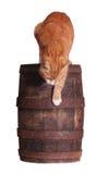 Kat en houten vat stock foto