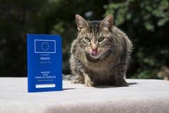 Kat en Huisdierenpaspoort Stock Foto