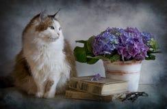 Kat en hydrangea hortensia Royalty-vrije Stock Afbeeldingen