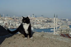Kat en Istanboel Stock Foto's