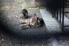 Kat en katje Stock Afbeeldingen