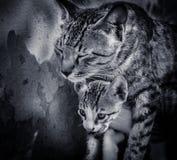 Kat en katje Royalty-vrije Stock Foto