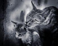 Kat en katje Stock Afbeelding