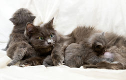 Kat en katjes Royalty-vrije Stock Foto