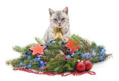 Kat en Kerstmis Stock Foto
