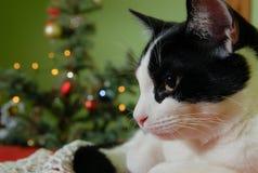 Kat en Kerstmisboom Royalty-vrije Stock Foto's