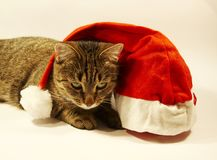 Kat en Kerstmishoed royalty-vrije stock afbeelding