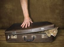 Kat en koffer 2 royalty-vrije stock afbeelding