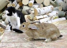 Kat en konijn Royalty-vrije Stock Foto's