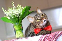 Kat en lelietje-van-dalen Stock Afbeelding