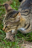 Kat en muis. Royalty-vrije Stock Afbeelding
