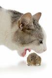 Kat en muis Stock Foto