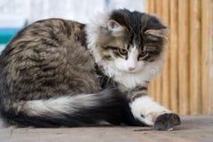 Kat en muis Royalty-vrije Stock Afbeelding