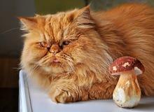 Kat en paddestoel Stock Foto