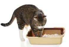 Kat en plastic toilet Stock Afbeeldingen
