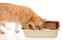 Kat en plastic toilet Stock Fotografie