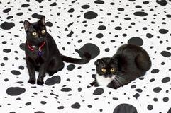 Kat en pot op een wit en zwart bed stock foto