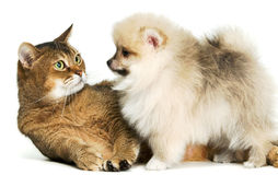 Kat en puppy Royalty-vrije Stock Foto