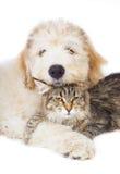 Kat en puppy. Stock Foto's