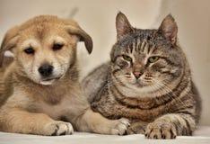 Kat en puppy Stock Afbeeldingen