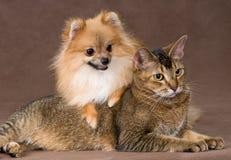 Kat en puppy in studio stock foto's