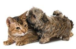 Kat en puppy in studio stock fotografie