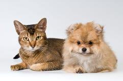 Kat en puppy in studio stock afbeelding