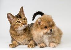 Kat en puppy in studio stock afbeeldingen