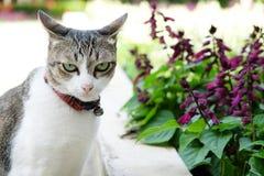 Kat en purpere bloem Royalty-vrije Stock Foto's
