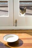 Kat en schotel melk Stock Afbeeldingen