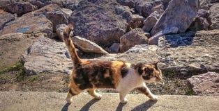 Kat en stenen Stock Foto