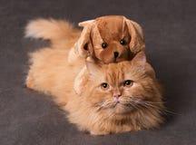 Kat en stuk speelgoed Stock Foto