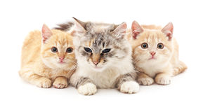 Kat en twee katjes royalty-vrije stock fotografie