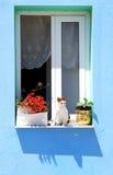 Kat en venster Stock Foto