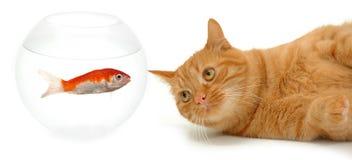 Kat en vissen Stock Foto's