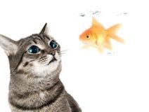 Kat en vissen Stock Foto