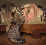 Kat en zijn slaapeigenaar royalty-vrije stock afbeelding