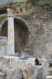 Kat, Ephesus Stock Afbeelding