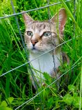 Kat Stock Images
