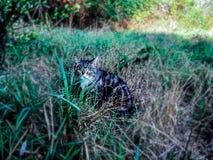 Kat, gebied, gras stock afbeelding