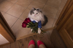 Kat gebrachte rozen als gift aan zijn mamma Stock Afbeelding