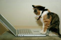 Kat gebruikend de computer Stock Foto's