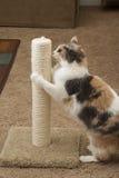 Kat gebruikend krassende post Royalty-vrije Stock Afbeeldingen