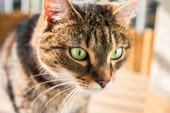 Kat geinteresseerd in iets op de vloer De kat zag iets Stock Afbeelding